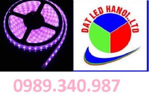 LED CUỘN 5050 MÀU HỒNG